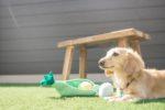 【屋上庭園の楽しみ方】愛犬のびのび!屋上ドッグラン。自宅屋上ならではの安心なプライベート空間。リード無しで自由に走り回れます。(屋上)
