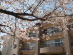 桜井小学校まで徒歩1分(周辺)